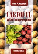 cartoful-cultivat-pe-suprafete-mici
