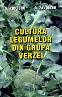 cultura-legumelor-din-grupa-verzei-cultivare-varza