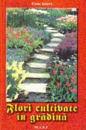 flori-cultivate-in-gradina