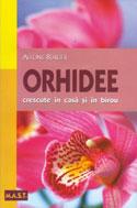 orhidee-crescute-in-casa-si-in-birou
