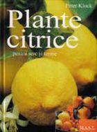 plante-citrice-in-apartamente-sere-si-gradini