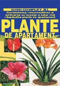 plante-de-apartament-ghid-complet-all
