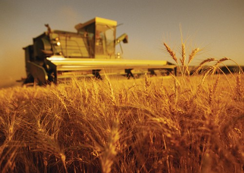agricultura-recolta-cereale