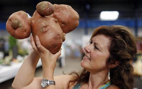 cel-mai-mare-cartof-din-lume