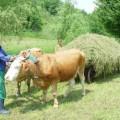 pensiile fermierilor, amanate din nou