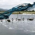 acvacultura-uniunea-europeana