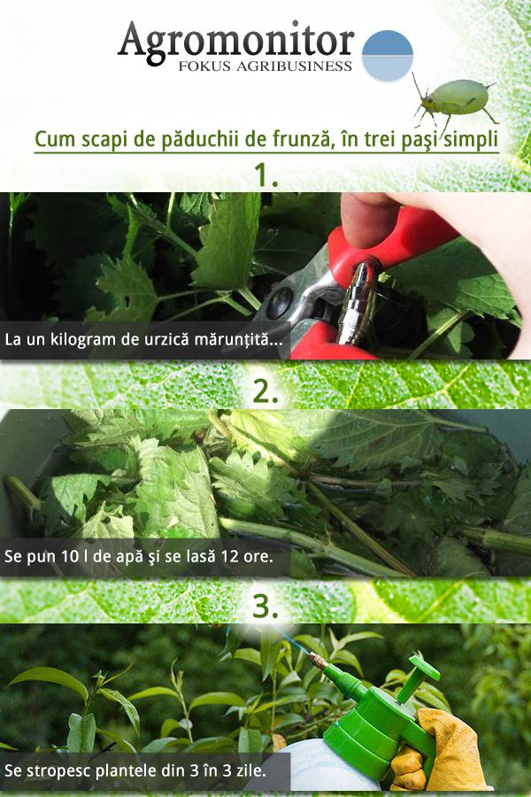 afide-urzici-tratament-agricultura-ecologica