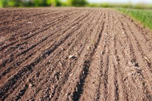 agricultura ecologica subventii fonduri europene