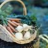 agricultura-ecologica-inspectie-certificare