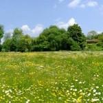 agricultura-ecologica-neamt-subventii-agricultura-ecologica