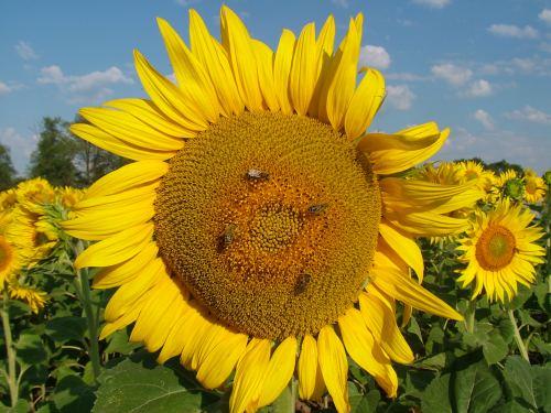 agricultura-ecologica-tulcea
