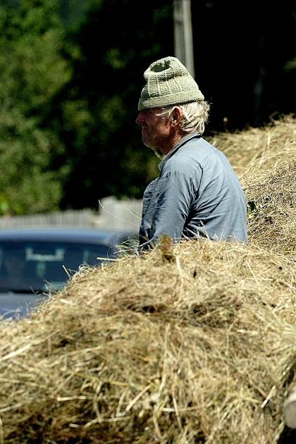 agricultura-studii-de-specialitate-terenuri-agricole-romania