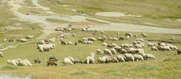 agricultura-zona-montana-viorica-dancila