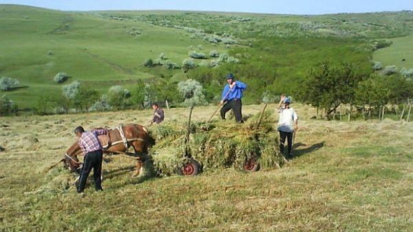 ajutoare-stat-fermieri