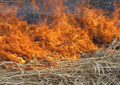 arderea-miristilor