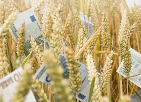asigurare-culturi-agricole-subventie