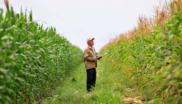 asigurari-culturi-agricole-fond-mutual-despagubire-despagubiri-agricultura-cotizatie