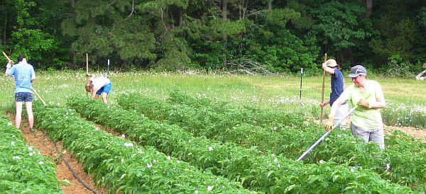 asociere-agricultura-declaratie-lapar-laurentiu-baciu