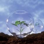 autoritatea-nationala-fitosanitara