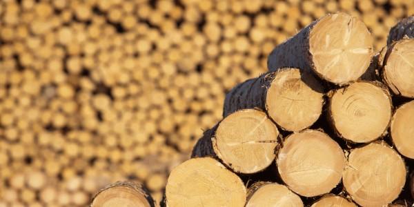 biomasa-busteni