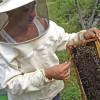 calendar-apicultura-iunie