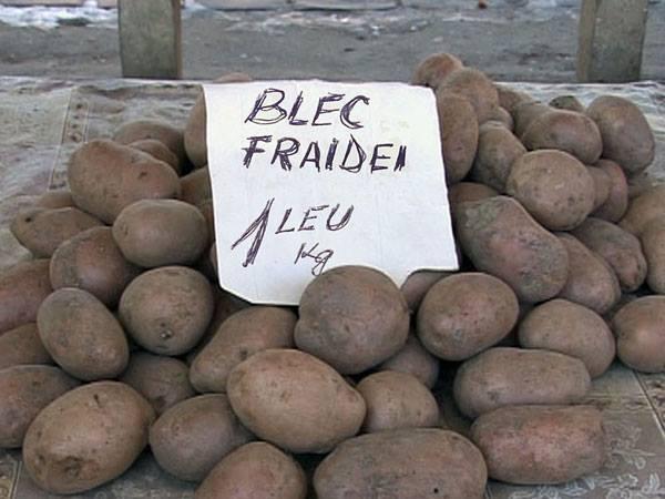 cartofi-un-leu-kilogramul-blec-fraidei