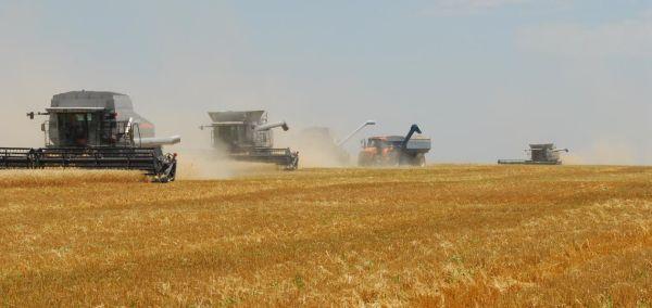 cereale-2013-grau-2013-recolta-productie-vand