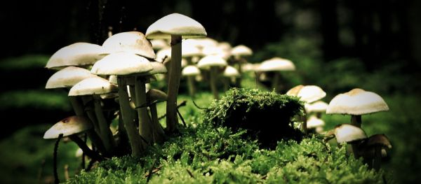 ciuperci-poze-cu-ciuperci-macro-ciuperci