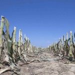 combaterea-efectelor-secetei