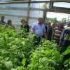 demonstratie practica ploscuteni ferma solar legume