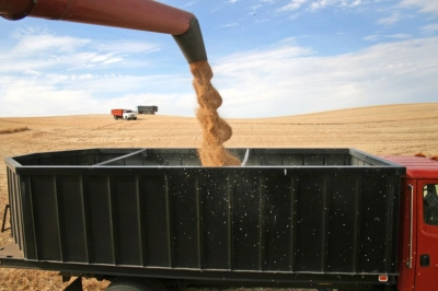 evaziune-fiscala-cereale-2013