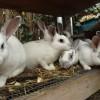 ferma-iepuri