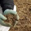 fertilizare-gunoi-de-grajd