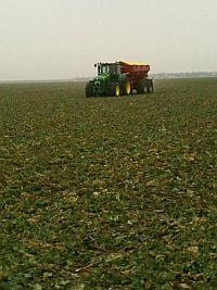 fertilizare-rapita-in-primavara-agrococora