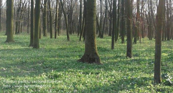 fonduri-europene-2014-paduri-forestier