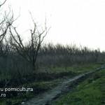 fonduri-europene-pomicultura-pomi-fructiferi-2014