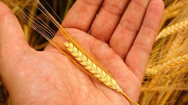 fonduri-europene-subventii-subventie-agricultura-2014