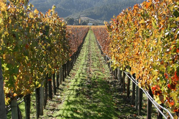 fonduri-viticultura-subventii-fonduri-europene-bani