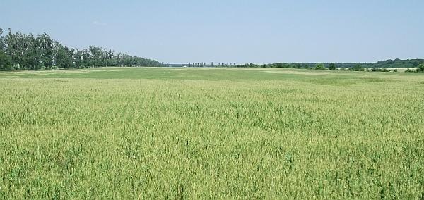 iasi-agricultura-suprafata-cultivata-semanata-iasi