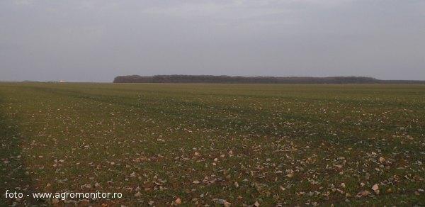 impozit-venituri-arenda-terenuri-agricole