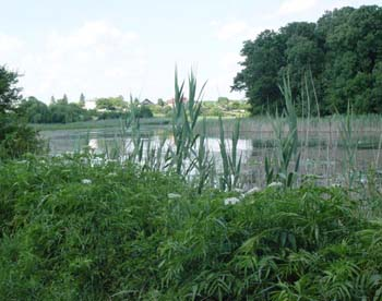 lacul-scrovistea