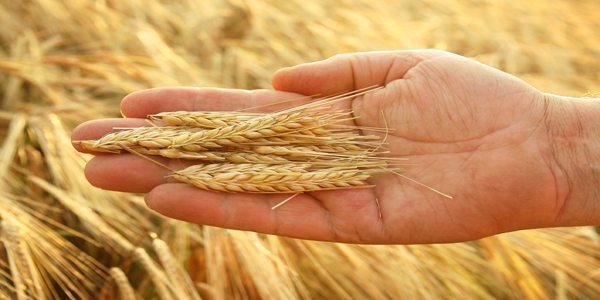 pretul-graului-2103-pretul-cerealelor