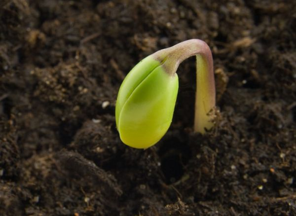 principalele-epoci-de-semanat-la-legume-cultivarea-legumelor