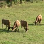 registru-genealogic-asociatii-crescatori-bovine