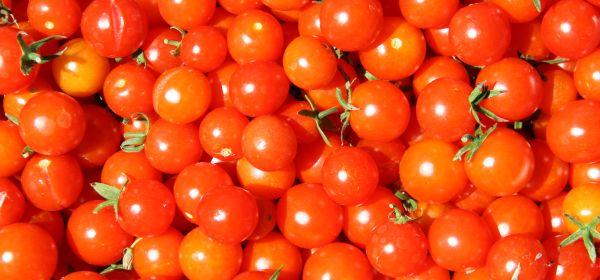 rosii-productie-pret-tomate-2013