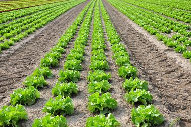 statistici-agricole-ancheta-structurala-agricultura-2013-2014