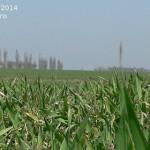 subventia-pe-suprafata-2014-cereri-de-plata-agromonitor