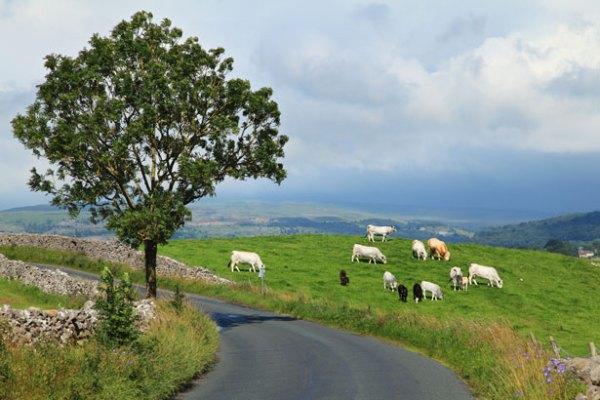 subventie-bovine-2013-2014