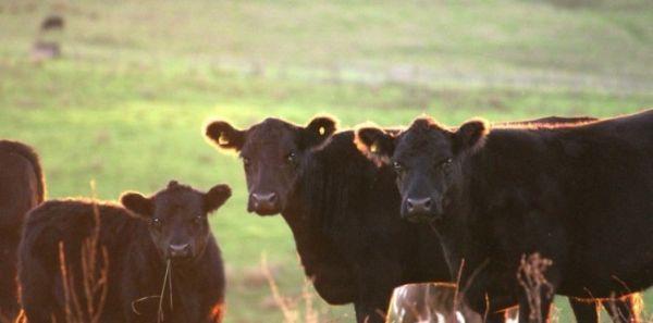 subventie-bovine-zone-defavorizate
