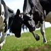 subventii-2013-agricultura-taierea-subventiilor